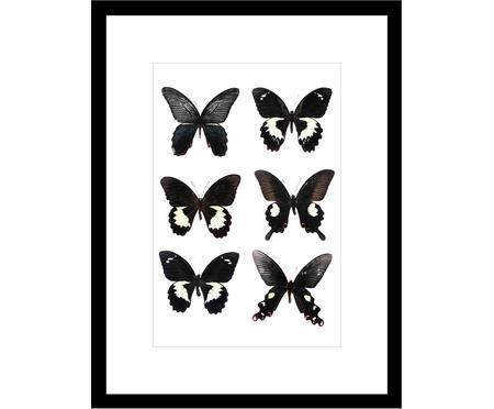 Digitálna tlač s rámom Butterflies Dark